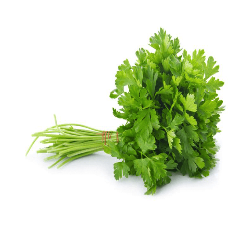 CORIANDER LEAVES (DHANIYA)